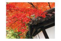 秋の思い出。(まだですが)