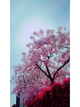 春だからこそ!アロマを^^