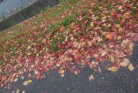 散歩で秋発見っ!
