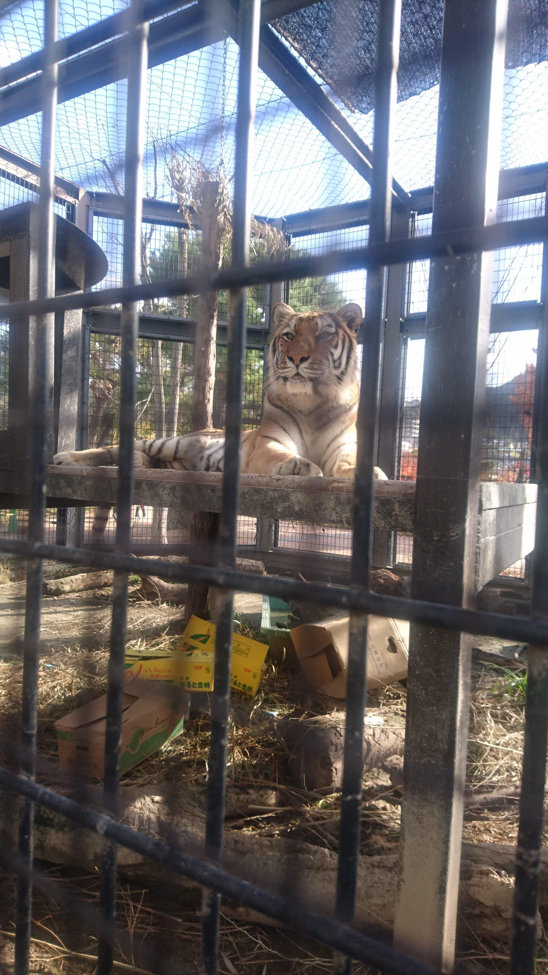 京都市動物園へ行ってきました♪