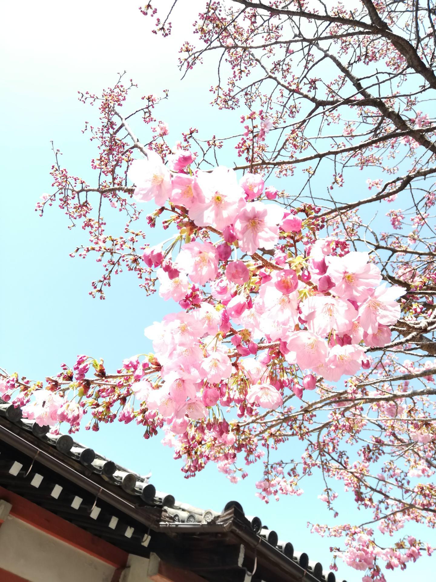 春の宇治散策♪